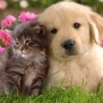 Animale de companie –prieteni de suflet pentru suflet